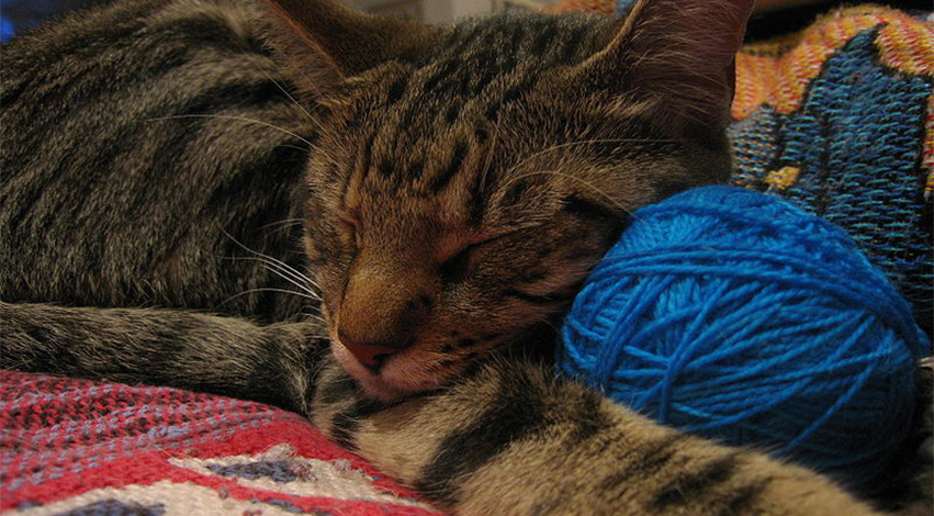cat and yarn - 2 tricks you can use to get your cat to exercise on a daily basis