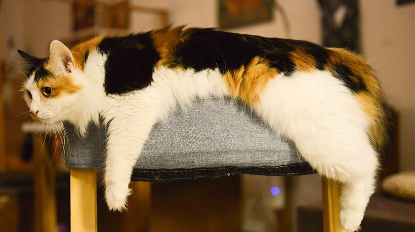 cat in couch 840x470 - 4 essential cat products that your furry feline can't live without