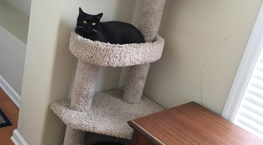cat tower - 2 tricks you can use to get your cat to exercise on a daily basis