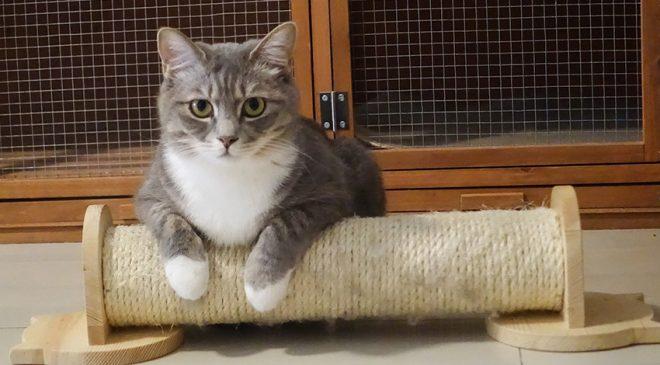 cat trick 660x365 - cat-trick