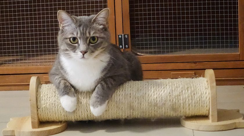 cat trick 840x470 - 2 tricks you can use to get your cat to exercise on a daily basis