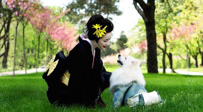 dog white 660x365 - dog-white