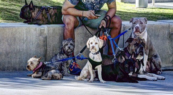 dogsitter 660x365 - dogsitter