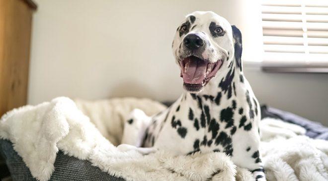 pet dogs 660x365 - pet-dogs