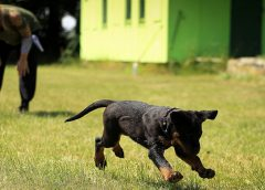 These 4 psychological traits of dogs will help you whilst training them