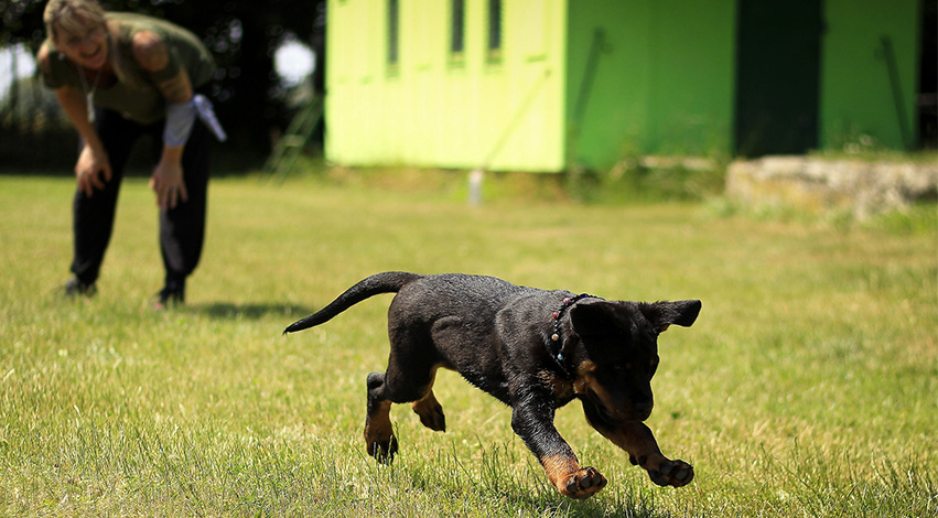 train dog puppy - These 4 psychological traits of dogs will help you whilst training them