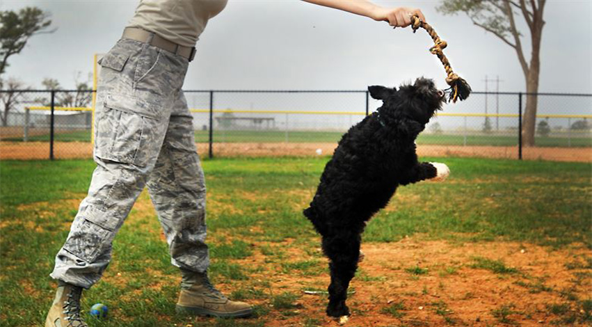 train - Trouble training your pup? These 4 tricks of the trade may just help you